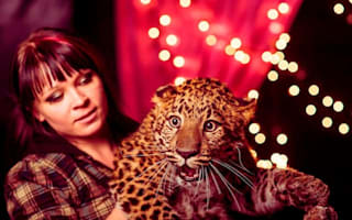 Circus leopard escapes from circus ring and mauls woman