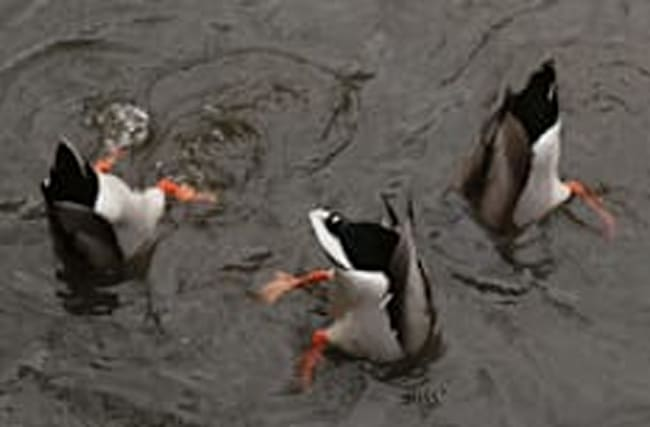 Sign reveals why you need to stop feeding bread to ducks