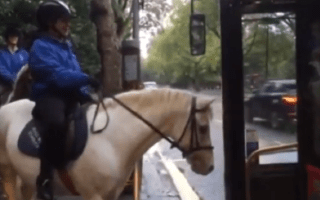 Reporter tries to get horse on London bus (video)