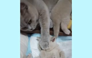 Watch: Mother cat and kitten have a chat
