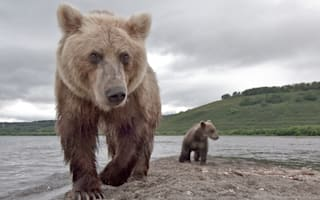 Man, 80, fights off bear attack then falls down cliff - and survives