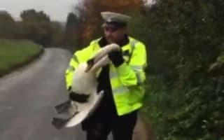 Norfolk police echo Hot Fuzz film by saving swan