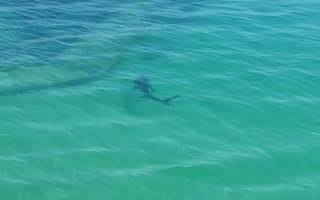 Large shark spotted in Cornwall