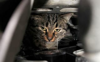 Turkish driver finds cat wedged in engine