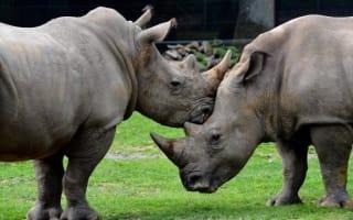 Poachers break into Paris zoo and shoot rhino