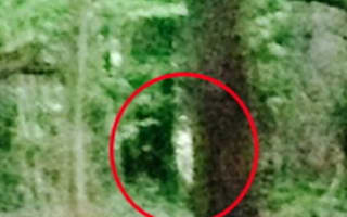 Campers catch 'Blair Witch ghost' on camera in woods near Bristol