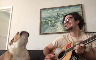 Winston the singing bulldog rocks out with his owner
