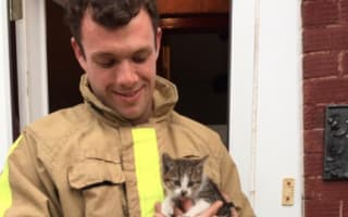Kitten travels in car engine for 10 miles