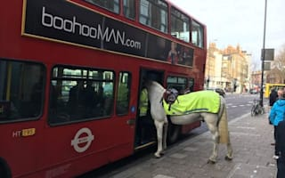 Horse spotted getting onto London bus