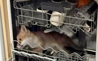 Man finds fox stuck in his dishwasher