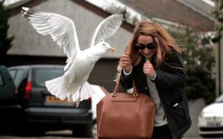 UK tourist town 'terrorised' by seagulls smashes 600 eggs