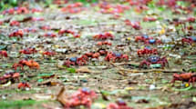 Pronto podrás disfrutar de esta hipnótica marcha de cangrejos en Google Maps