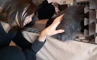Pet lovers go wild for Japan's rabbit cafe