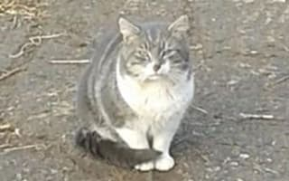 Don't shoot Mr Skanky Pants! Villagers campaign to save cat