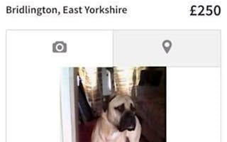 Stolen dog is sold three times in 24 hours