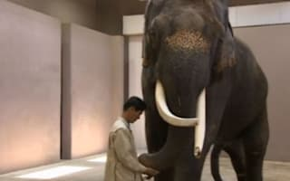 Video: Zoo elephant 'learns to speak Korean'
