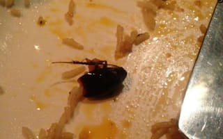 Was this cockroach lurking in this chicken curry?