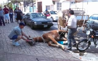'Overworked' tourist carriage horse collapses in street