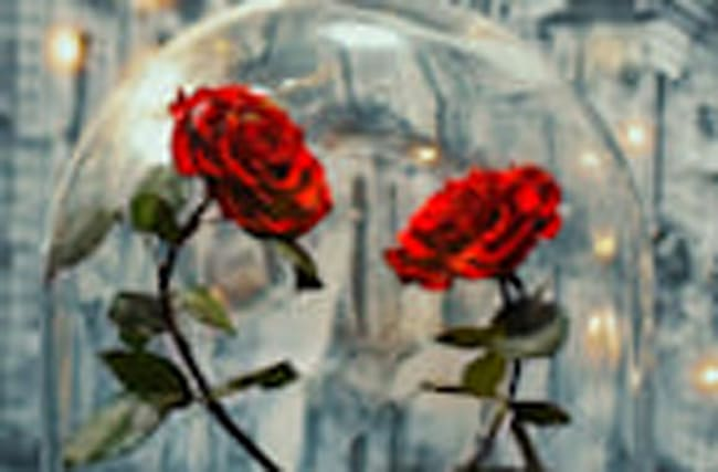 These Real Enchanted Roses Will Last Over 20 Magical Years