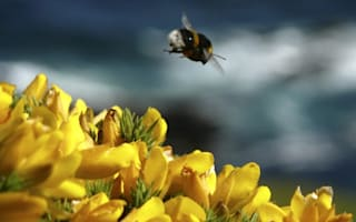 Farmers to create 3,000-mile 'bee motorways' around Britain?