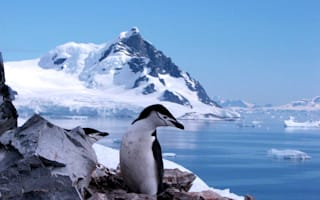 Alternative Antarctica: SeaWorld's latest icy attraction