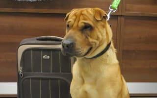 Hundreds of pounds raised for abandoned dog left at railway station