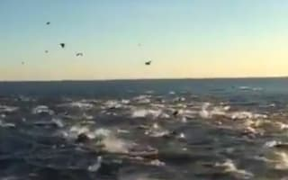 Video: 'Mega-pod' of 100,000 dolphins delights tourists in San Diego
