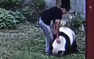 Man climbs into panda enclosure to impress women at zoo