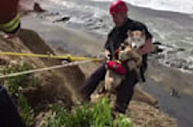 Dramatic Dog Rescue in California