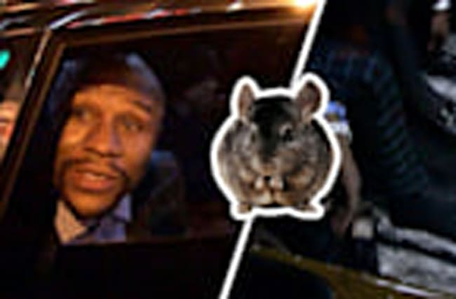 Floyd Mayweather: Rub Your Feet On My Chinchilla Rug!