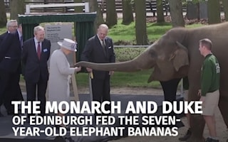 Donna the elephant goes bananas on meeting Queen at Whipsnade