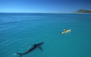 Huge great white shark stalks kayak in South Africa
