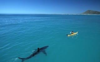 Huge great white shark stalks kayak in South Africa