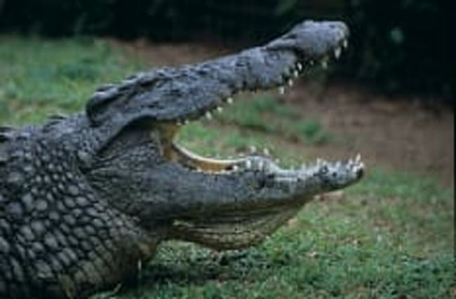 Surfer attacked by crocodile in Costa Rica