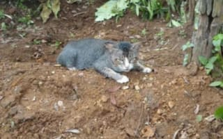 Depressed cat mourns owner by refusing to leave her graveside