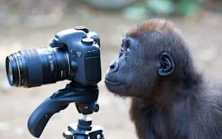 Pictures: Amazing Animal Photography Prize 2012 from ZSL