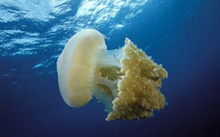 Jellyfish are taking over our oceans, say experts