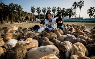 The world's weirdest islands where animals rule