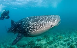 Sleepy Philippines village now buzzing tourist attraction thanks to whale sharks