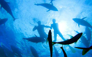 Take three: diving holidays (great whites and tuna included!)