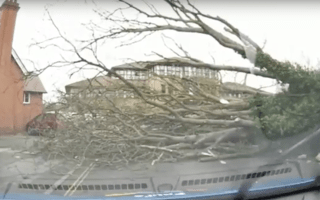 Dashcam captures bone-chilling moment tree falls in road during Storm Doris