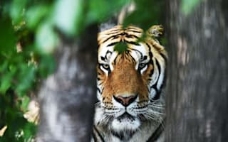 Woman mauled to death by tiger after ignoring warnings at safari park