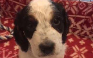 'Cruel' burglar drowns puppy in bath