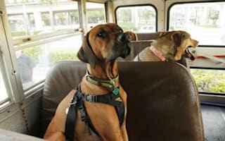 Bus company starts charging for dogs: is it fair?