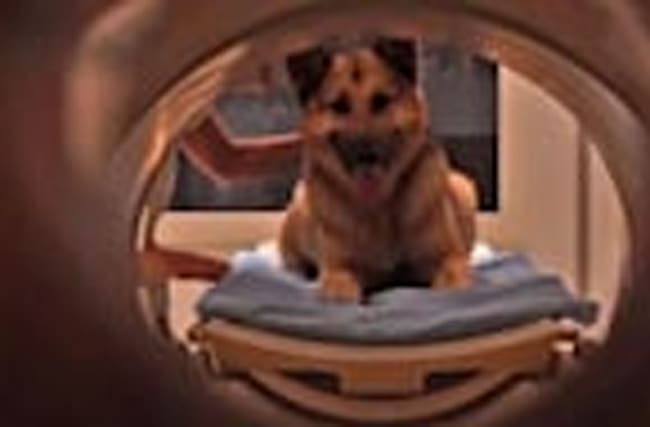 Dogs Know What You're Saying, Study Suggests