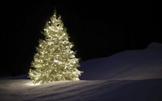 Where can you get a Christmas tree for 10p?