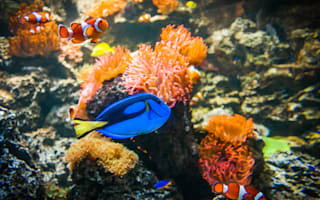 Win! An annual family pass to Sea Life Brighton, worth over £150