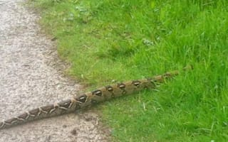 Six foot snake spotted at North Yorkshire beauty spot