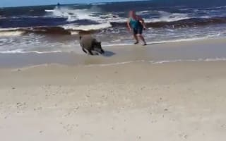 Wild boar attacks sunbathers on beach in Poland