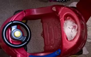 Tiny kitten gets head stuck in toy car